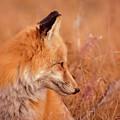 Found Fox by Fbmovercrafts