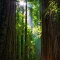 Founders Tree Sunset by Joe Urbz