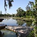 Fountain At The Swamp by Christiane Schulze Art And Photography