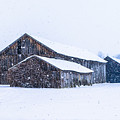 Four Barns In A Snowstorm by Libby Lord