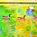 Four Canadian Geese In The Water 1 by Jeelan Clark