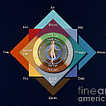 Four Elements, Ages, Humors, Seasons by Wellcome Images