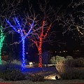 Four Lighted Trees by Susan Brown