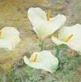 Four Lilies by Hal Halli