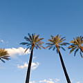 Four Palm Trees by Rich Iwasaki