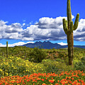 Four Peaks And Poppies, Springtime, Arizona by Don Schimmel