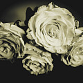 Four Roses by Chellie Bock