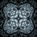 Noir Four Roses Symmetrical Focus by Mona Stut