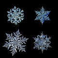 Four Snowflakes On Black Background by Alexey Kljatov