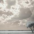 Four Trees by Gary Bartoloni