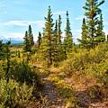 Four Wheeler Trail - Richardson Highway by Cathy Mahnke