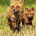 Fox Family by Mircea Costina Photography