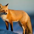 Fox by Fbmovercrafts