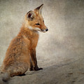 Fox Kit 2018 by Bill Wakeley
