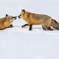 Fox Love by Brenda Jacobs