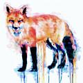 Fox  by Marian Voicu