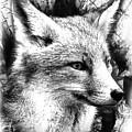Fox by Rodrigo Butcher
