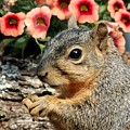 Fox Squirrel Portrait by Sheila Brown