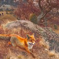 Fox With Hounds by Celestial Images