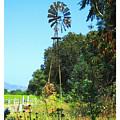 Foxen Adobe Windmill by Deborah Hildinger