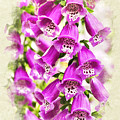 Foxglove Flowers Blank Note Card by Christina Rollo