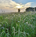 Foxtail Grasses In Glacial Park by Ray Mathis
