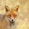 Foxy Faces Series- That Look by Roeselien Raimond