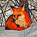 Foxy by Modern Art
