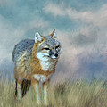 Foxy by Judy Vincent