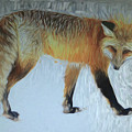 Foxy Lady  by Dennis Baswell