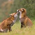 Foxy Love- Kiss by Roeselien Raimond