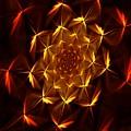 Fractal Floral 062610a by David Lane