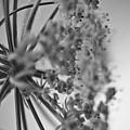 Fractal Flower Photoset 03 by Ryan Kelly