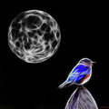 Fractal Moon And Bluebird by Ericamaxine Price