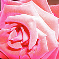 Fragrant Rose by Marie Hicks