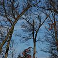 Framed In Oak - 1 by Linda Shafer