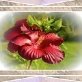 Framed Red Hibiscus by Sherman Perry