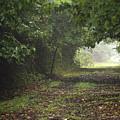 Framed Summer Woods by Andrew Kazmierski