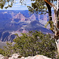 Framed View - Grand Canyon by Larry Ricker