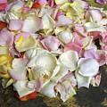 France Flower Petals, Still-life by Keenpress