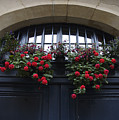 France, Paris, Flower Bouquet Hanging by Keenpress