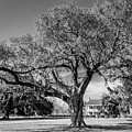 Frances Antebellum Home Bw by Gregory Daley  MPSA