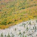 Franconia Notch State Park - White Mountains Nh Usa Autumn by Erin Paul Donovan