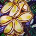 Frangipani In The Tropics  Series 1 by Carmela Maglasang