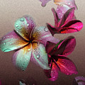 Frangipani With Overlay by Michelle Meenawong