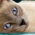 Frankie Blue Eyes by Becky Herrera