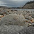 Fraser River by Vivian Martin