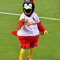 Fred Bird by Lovely  Scenes Photography
