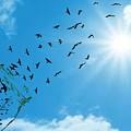 Free Bird by Ashikur Rahman
