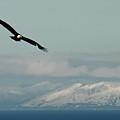 Free Flight by Rick  Monyahan